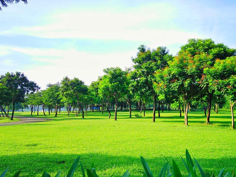 Tổ chức tiệc ngoài trời tại công viên Yên Sở